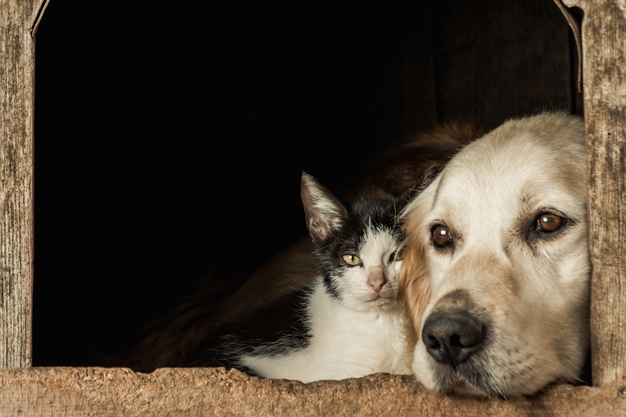 Mange in Dogs and Cats