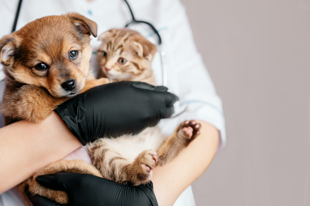 Canine Flu: Should Your Dog be Vaccinated?