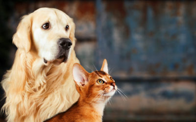 Diabetes Mellitus in Dogs and Cats