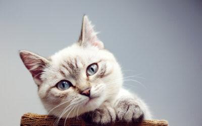 The Blocked Cat: A True Feline Emergency